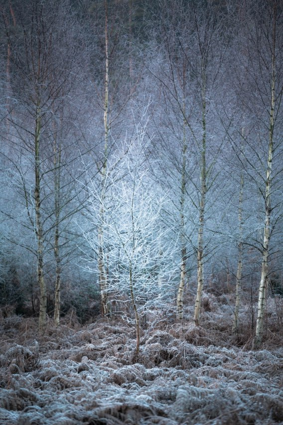 Taken on a frosty early morning walk around Sherwood Forest in late December.