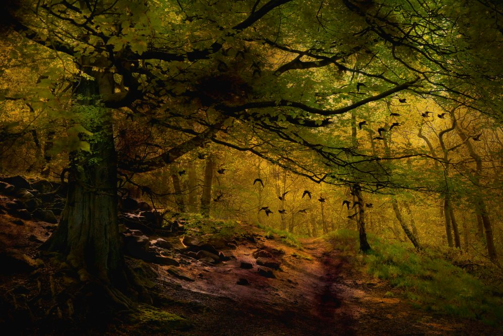 forest image by Heather Burns